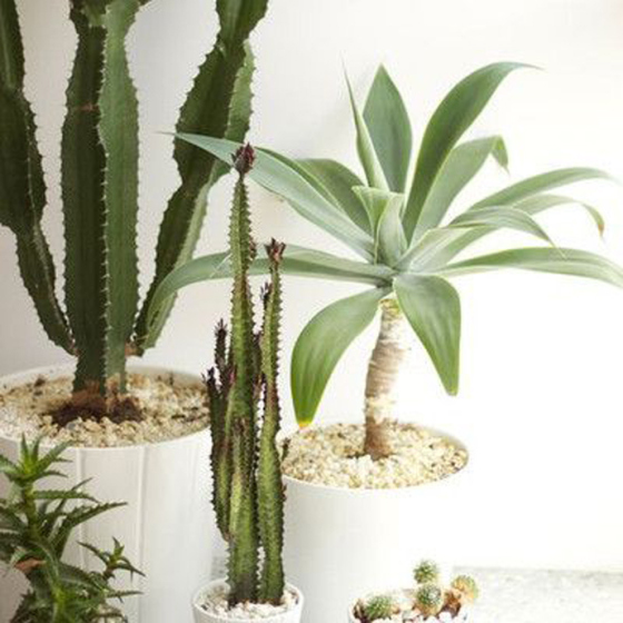 Cactus plants with white background, Behind the Mirror, Weekend Inspiration,